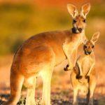 Kinh nghiệm khi xin visa đi Úc du lịc